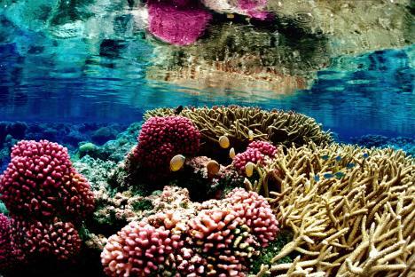 A coral reef at the Palmyra Atoll National Wildlife Refuge. Photo courtesy Jim Maragos/USFWS.