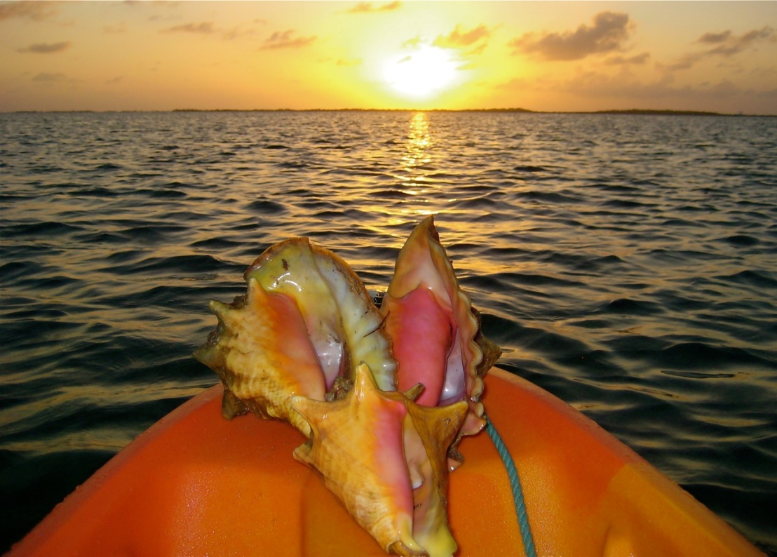 One of my favorite views is over the bow of a kayak, like here in Belize.