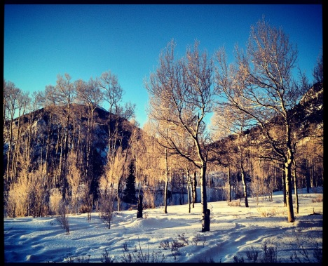 Sunrise in an aspen grove.