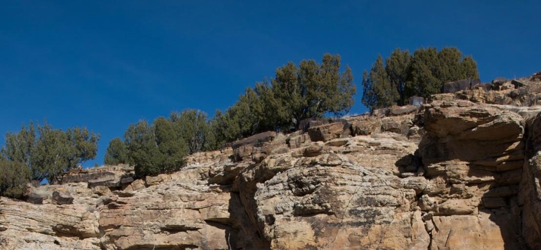 Piñon pines growing in the badlands of southeastern Colorado. Bob Berwyn photo.