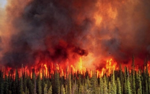 A wildfire burns through a western conifer forest. Photo courtesy U.S. Forest Service.