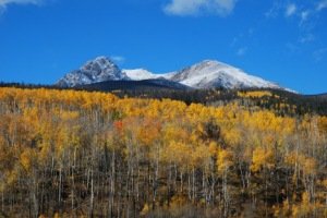 Colorado aspen forests and global warming