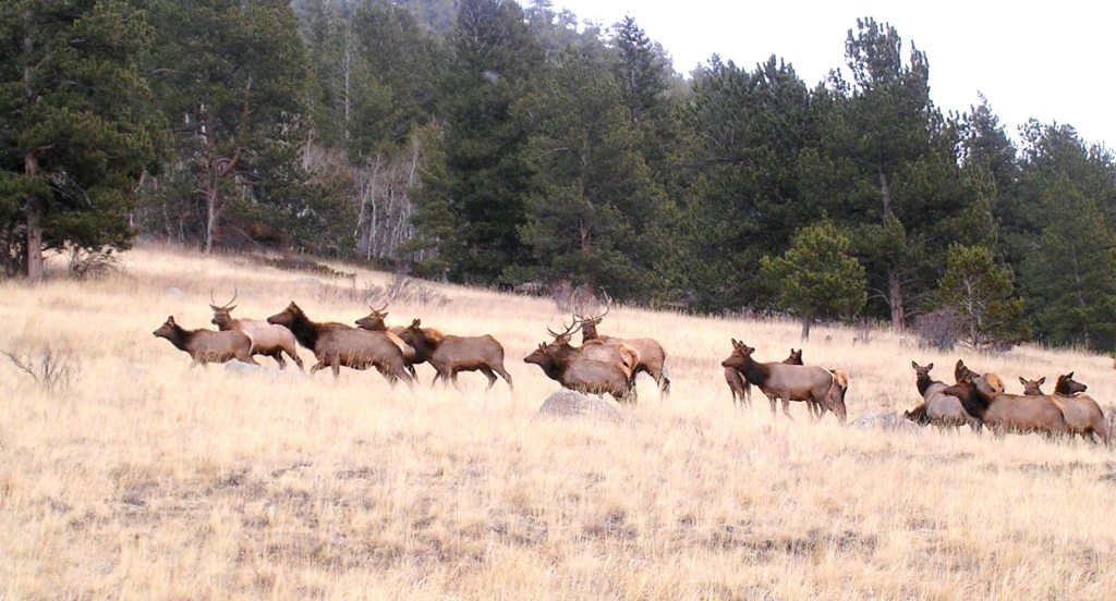 poaching – Page 2 – Summit County Citizens Voice