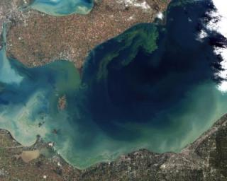 This NASA Landsat-5 image shows the record-breaking algal bloom in Lake Eerie in October of 2011. The green scum is mostly microcystis, a toxin to mammals.