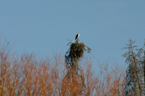The nest from a distance.