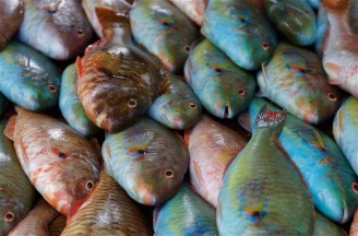 At the fish market in Negril, Jamaica.
