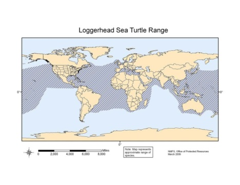 A NOAA map showing the range of loggerhead sea turtles.