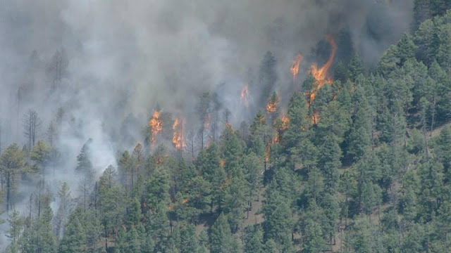 The Lime Gulch Fire burning in live trees near Conifer, Colorado. Photo courtesy Jefferson County Sheriff's Office.