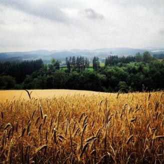 Wheat field in Upper Austria