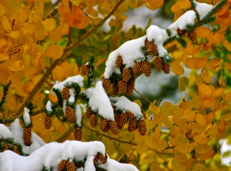 autumn snow colorado
