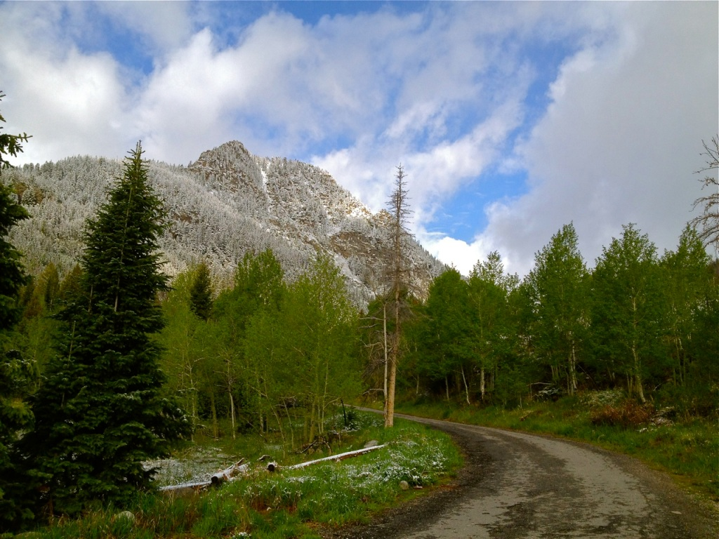It's not unusual to get May snow in Summit County, and the aspen trees are well able for it.