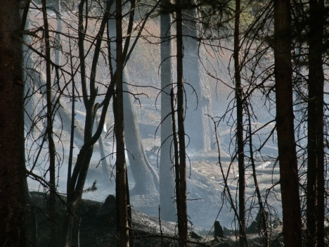 Post-fire landscapes are important in the big picture of long-term forest health. bberwyn photo.