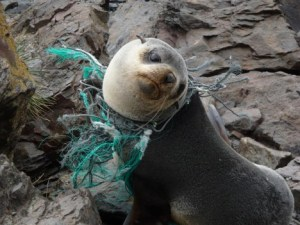 rs9607_seal_plastic_ewanedwards_theclippertonproject_fpwc_media_use_ok-scr