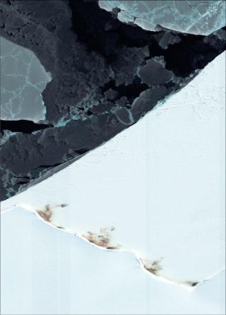Emperor penguin colonies show up as dark splotches against the white ice near Halley Bay. PHOTO COURTESY DIGITALGLOBE.
