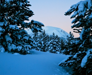 Pre-dawn, post snowstorm glow on Buffalo Mountain, above Silverthorne, Colorado.