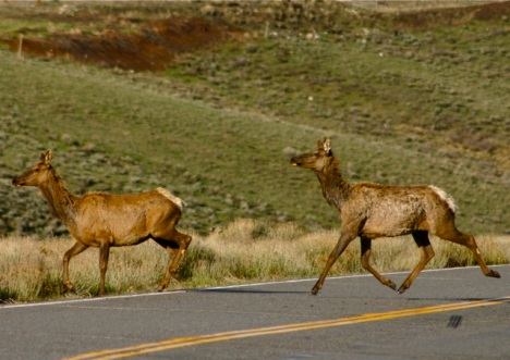 You know when you see those wildlife crossing signs?