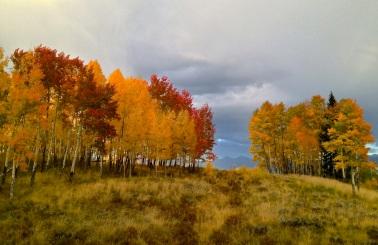 Revisiting a favorite patch of colorful aspens near Frisco, Colorado.