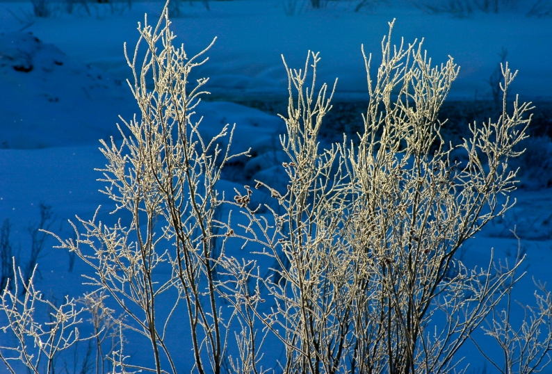 First light against cold blue winter shadows.