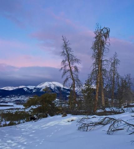 Lodgepole pine graveyard, Swan Mountain.