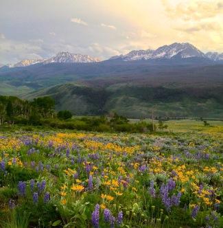 Looking forward to wildlfower season in Colorado.