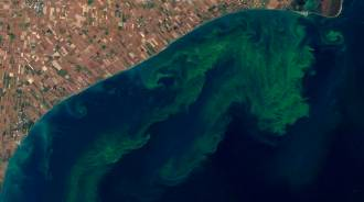 Toxic algal blooms like this one in Lake Erie in 2011 can cause human and animal health risks, fish kills, and degrade drinking water supplies. Image Credit:  USGS/NASA Earth Observatory