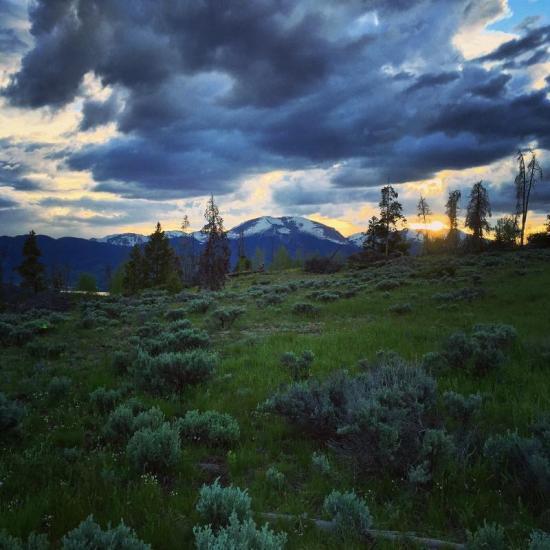 Sage meadow.