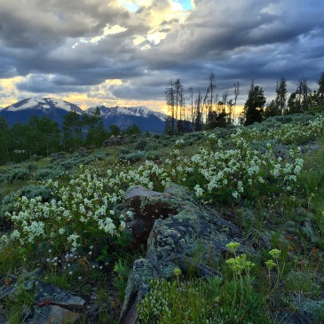 Sunset and wildflowers over the Gore Range.