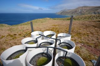 Macquarie Island cushion plants