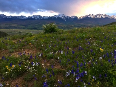 Wildflower meadow in the Williams Fork Range.