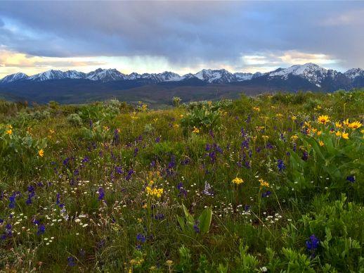 Wildflower season!
