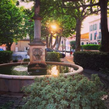 The setting sun winks through the giant leaves of a plane tree in a peaceful town square in the Provence.