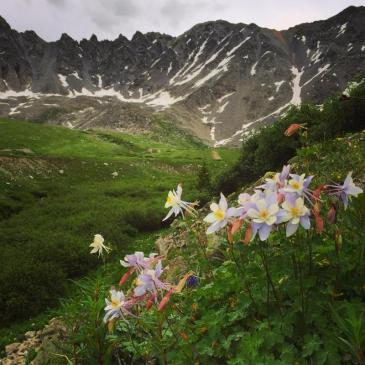 Delicate columbines thrive in the old mining dumps.