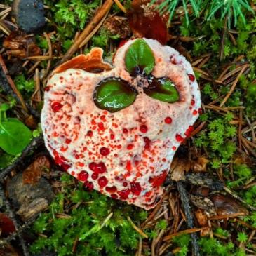 Mushroom love!