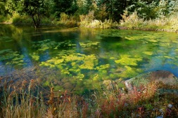 Global warming and nitrogen are a bad combination and will result in serious algae problems in many waters.