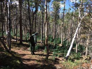 A U.S. Forest Service law enforcement ranger looks over an illegal marijuana growing operation on the San Isabel National Forest. Photo courtesy U.S. Forest Service.