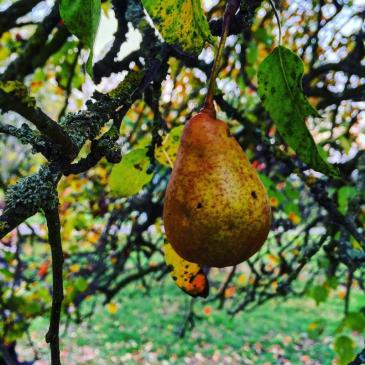 Last fruits of autumn cling to the branches in the Upper Austrian Mühlviertel.