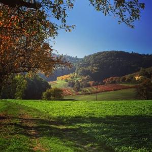 Reddening vineyards.