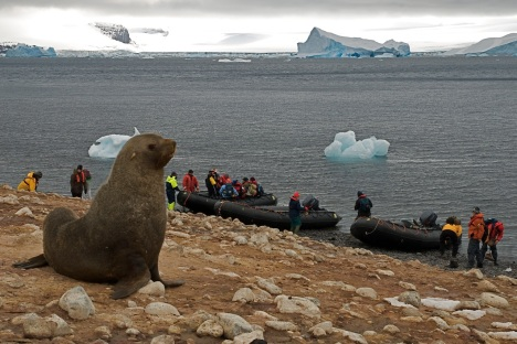 A seal is far outnumbered by tourists on the shores of Paulet Island, along the Antarctic Peninsula. @bberwyn photo.