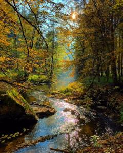 Autumn light in the Aistal, near Linz, Austria.