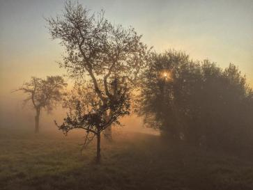 Timeless mist.