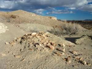 Bones of a juvenile mammoth spilling out of the ground in Tule Springs Fossil Beds National Monument (TUSK). USGS scientists are currently investigating geologic deposits exposed throughout TUSK to determine how the springs and marshes that attracted the animals responded to climate change in the past.