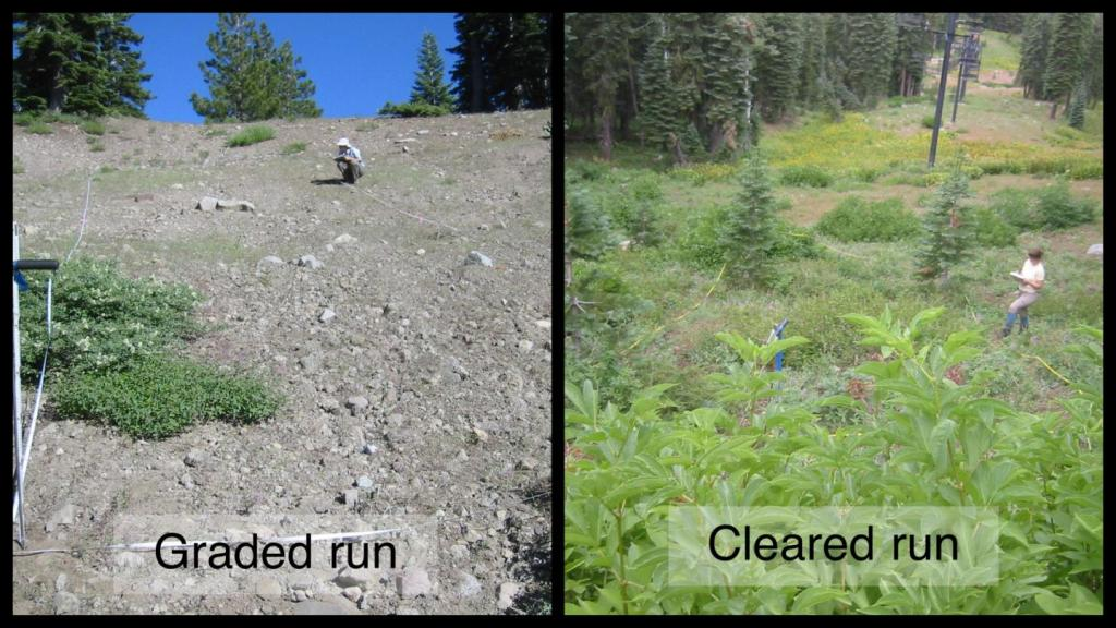 Land recovery after a ski slope is abandoned can be starkly different depending on how it was constructed. The graded run, left, was abandoned 13 years before with little sign of new vegetation. The cleared run, right, was abandoned 10 years before and plant life is abundant.
