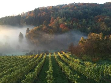 Autumn vineyards in the Steiermark.