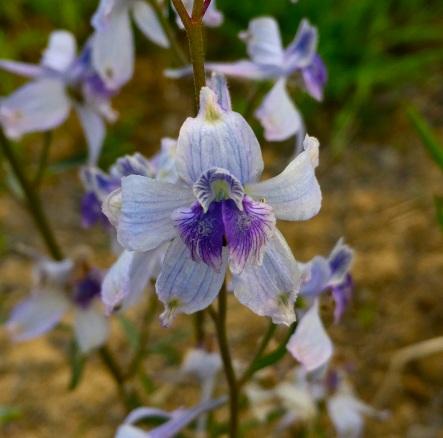 Wildflower season.