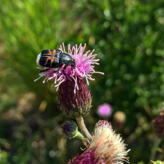 Got nectar?
