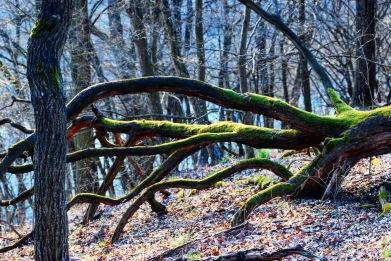 Beech forest Thayatal National Park Austria