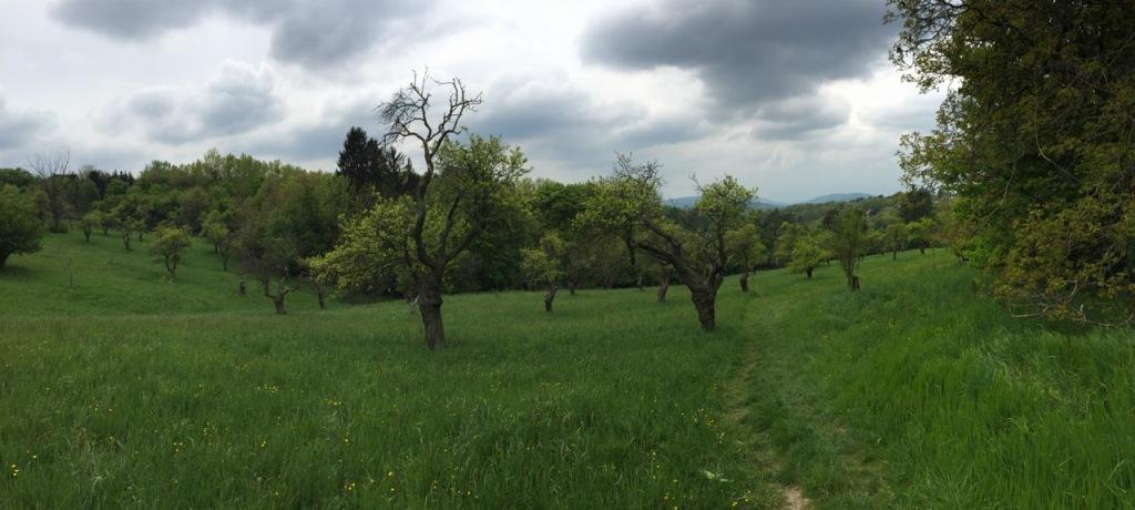 Old orchard Vienna