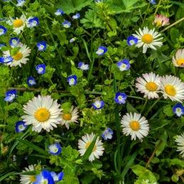 flowers austria