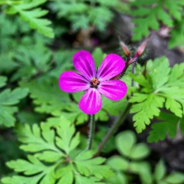 Austrian wildflowers