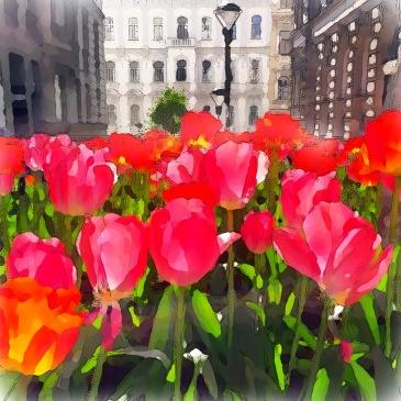 tulips in Vienna